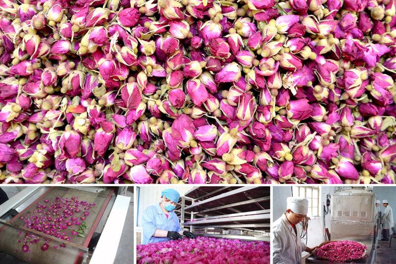 玫瑰花生产线