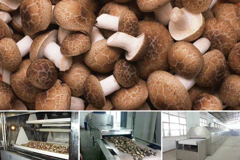 香菇生產線