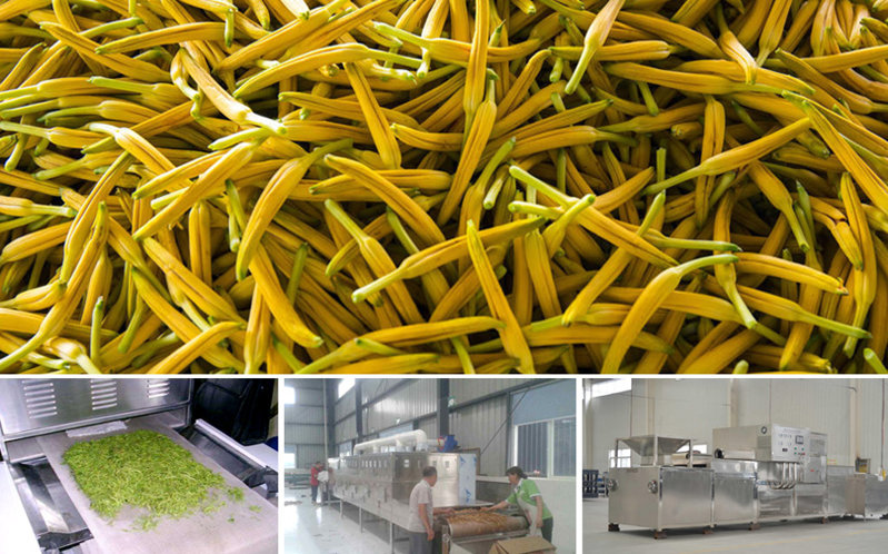 黃花菜生產線